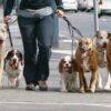 StarOfService Dogsitter