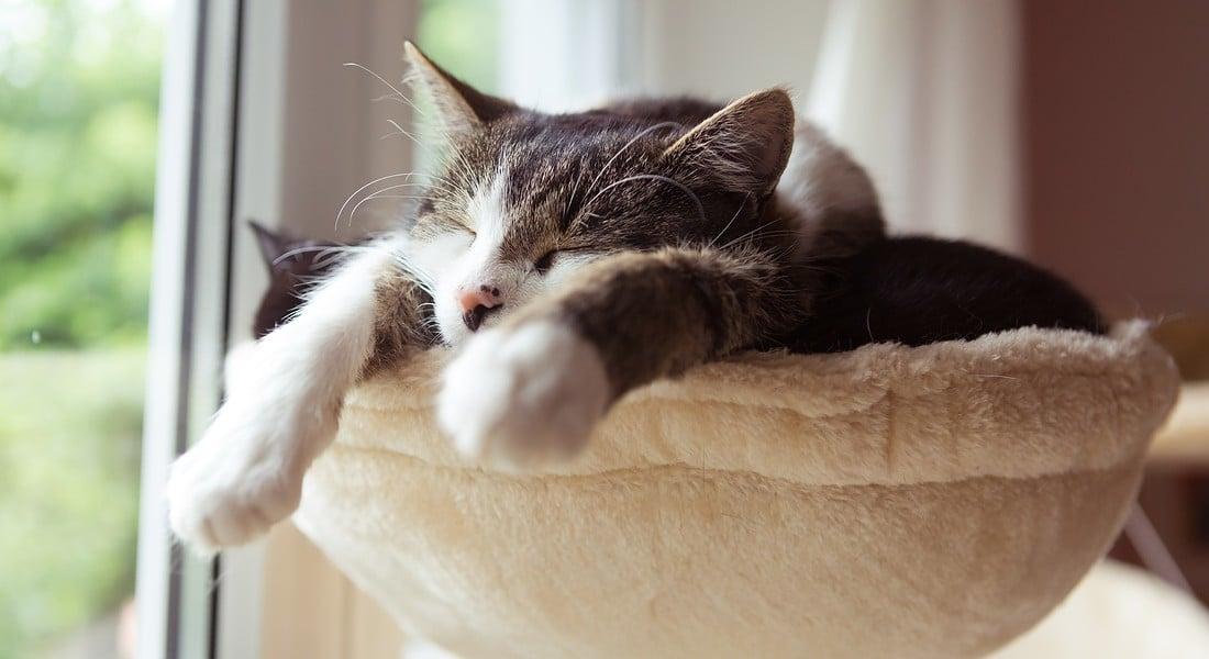 antiparassitario gatto migliore